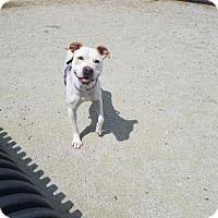 Adopt A Pet :: Jake - Philadelphia, PA