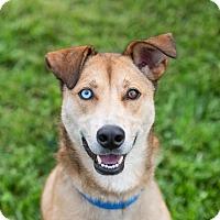Adopt A Pet :: Molly - Seville, OH