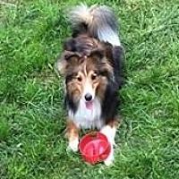 Adopt A Pet :: Jax - Pittsburgh, PA