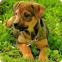 Adopt A Pet :: Milo - Staunton, VA