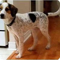 Adopt A Pet :: Ice - Toronto/Etobicoke/GTA, ON