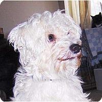 Adopt A Pet :: Max - Orange Park, FL
