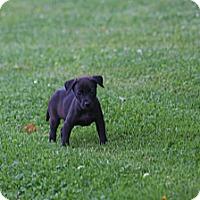 Adopt A Pet :: Jill - Morgantown, WV