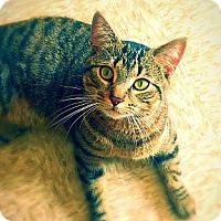 Adopt A Pet :: Tacoma - Green Bay, WI