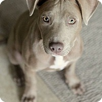 Adopt A Pet :: BUNNY - Redondo Beach, CA