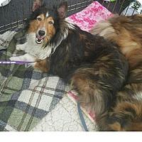 Adopt A Pet :: McAlister - COLUMBUS, OH