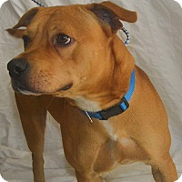 Adopt A Pet :: Cinnamon - St. Thomas, VI