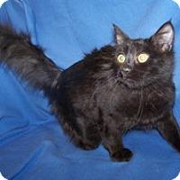 Adopt A Pet :: K-Meadows1-Tipton - Colorado Springs, CO