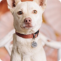 Adopt A Pet :: Mags - Portland, OR