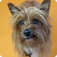 Adopt A Pet :: Deena - Seattle, WA