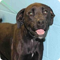 Adopt A Pet :: MAGGIE - Pittsburgh, PA