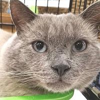 Adopt A Pet :: Sammy - E. Claridon, OH