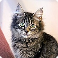 Adopt A Pet :: Bethany - Arlington, VA