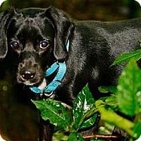 Adopt A Pet :: Princess - Hastings, NY
