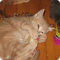 Adopt A Pet :: Quincy - Portland, ME