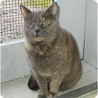 Adopt A Pet :: Gracie - Plainville, MA