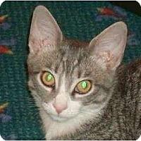 Adopt A Pet :: Tiggy - Port Republic, MD