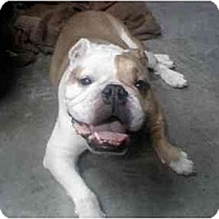 Adopt A Pet :: Charlie - conyers, GA