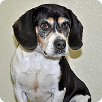 Adopt A Pet :: Dunkin - Port Washington, NY