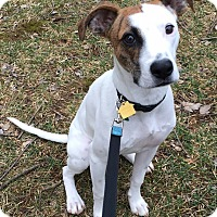 Adopt A Pet :: Archie - Staunton, VA