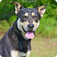 Adopt A Pet :: Simon - Fort Valley, GA