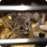 Adopt A Pet :: Toni - Hamilton, ON