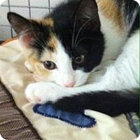 Adopt A Pet :: Jazzy - Trevose, PA