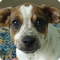 Adopt A Pet :: Janga - Staunton, VA