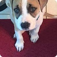 Adopt A Pet :: Luna... - Marlton, NJ