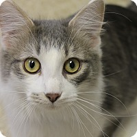 Adopt A Pet :: TJ - Medina, OH
