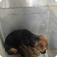Adopt A Pet :: CHARLIE - Conroe, TX