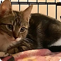 Adopt A Pet :: Sparklebuns - Glendale, AZ