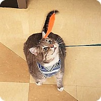 Adopt A Pet :: Tiny - Nottingham, MD