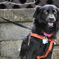 Adopt A Pet :: JOJO - Raleigh, NC