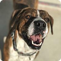 Adopt A Pet :: Joe - Hanna City, IL