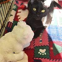 Adopt A Pet :: Aviv - Beacon, NY