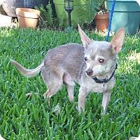 Adopt A Pet :: MIKEY - Houston, TX