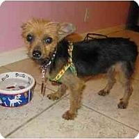 Adopt A Pet :: Mattie - West Palm Beach, FL