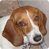 Adopt A Pet :: Miranda - Phoenix, AZ