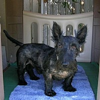 Adopt A Pet :: Chandler - Dallas, TX
