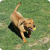 Adopt A Pet :: Rudy - Ararat, VA