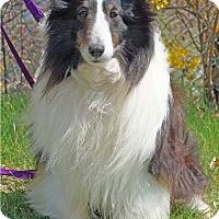 Adopt A Pet :: ALLEAH - Pittsburgh, PA