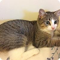 Adopt A Pet :: Neon - Smithfield, NC