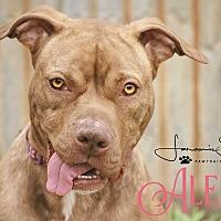 Adopt A Pet :: Alena - Cheney, KS