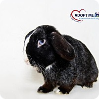 Adopt A Pet :: Westley - Alexandria, VA