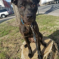 Adopt A Pet :: Bianca - Wichita, KS