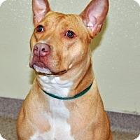 Adopt A Pet :: Egypt - Port Washington, NY