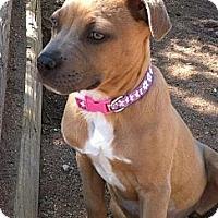 Adopt A Pet :: Little Lady - Phoenix, AZ