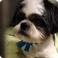 Adopt A Pet :: compi - Los Angeles, CA