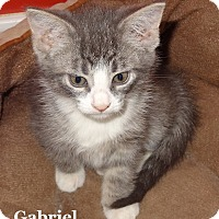 Adopt A Pet :: Gabriel - Bentonville, AR